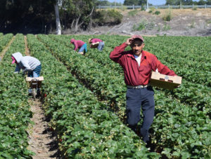 Lawmakers strike deal for undocumented immigrant farmworkers-e-immigrate-news