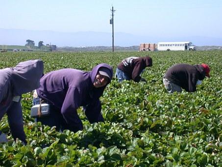 Inmigrantes en Miami son gran mayoría en agricultura, ciencia y manufactura