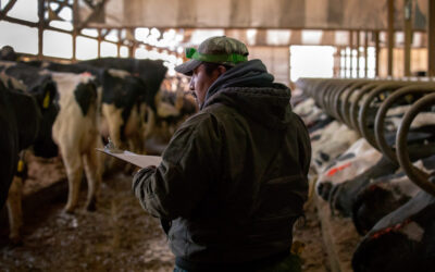 'It's five years since a white person applied': the immigrant workforce milking America's cows